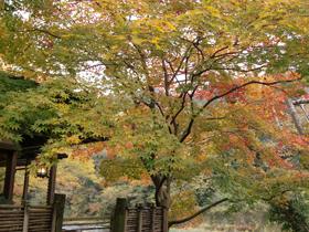 澤乃井園 紅葉情報 撮影日2012年11月13日