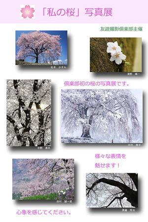 私の桜写真展