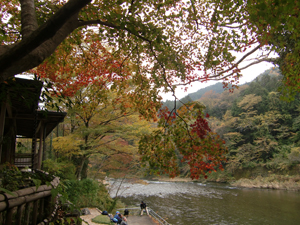 撮影日:2014.11.12