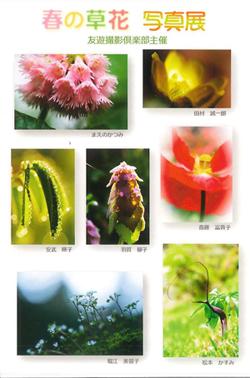 春の草花写真展