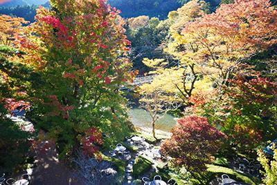 澤乃井園紅葉2020